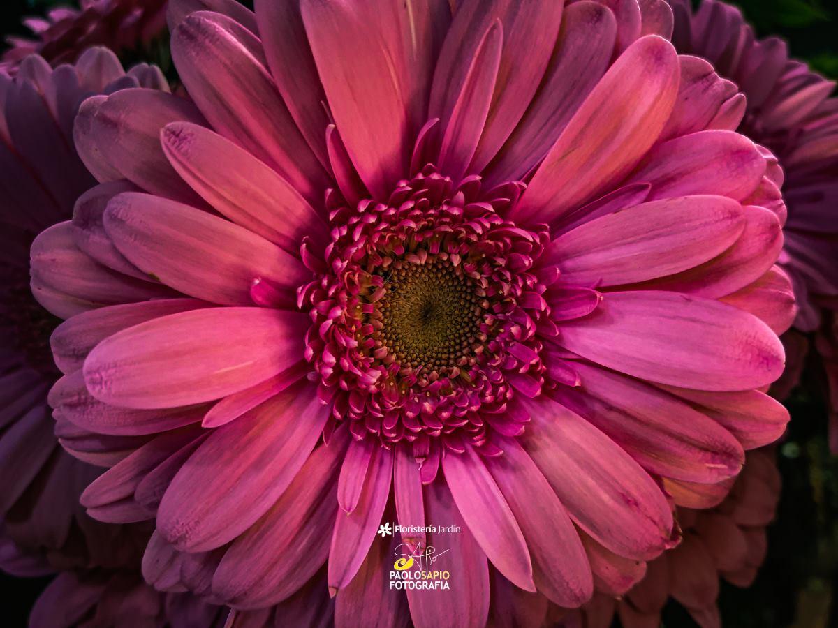 fotografias artisticas de flores